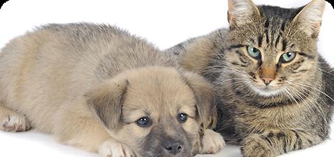 動物の立場に立った親身な診療